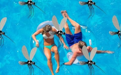 Don't Be Bugged Around Your Pool!