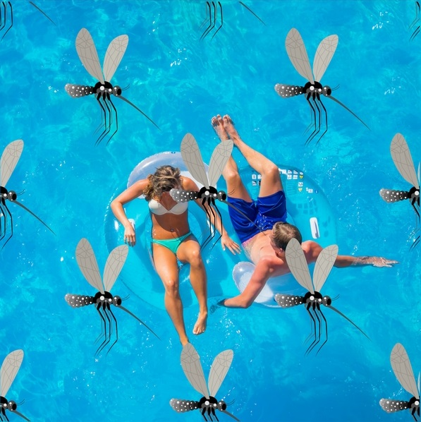 Are Bugs Bugging You Around Your Pool?