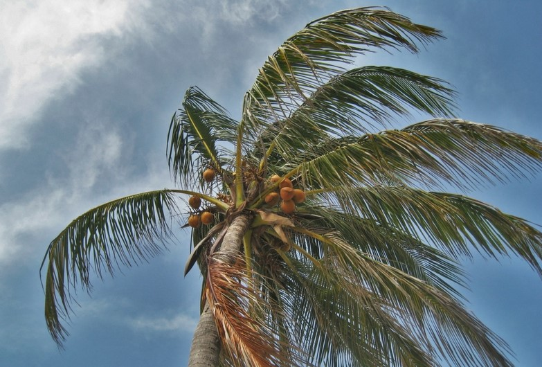 Minimize High Wind Affect On Your Florida Pool.